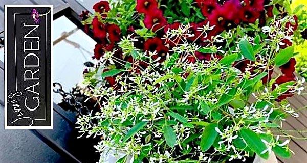 Nagu-Jenns-garden-bild3