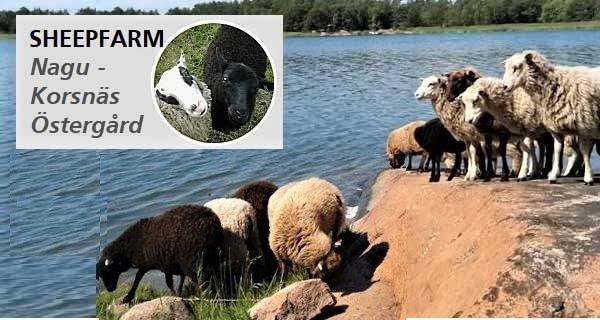 Nagu Korsnäs Östergård - Sheepfarm